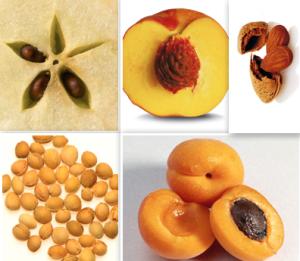 NOCCIOLI della frutta